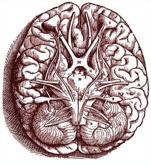 BrainB330