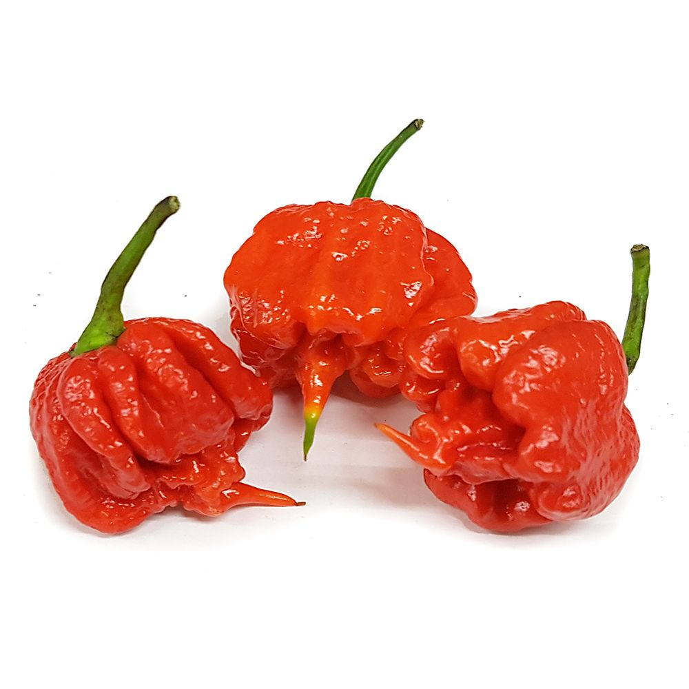 carolina-reaper-10-x-seeds-current-world-record-holder-january-sale-272-p
